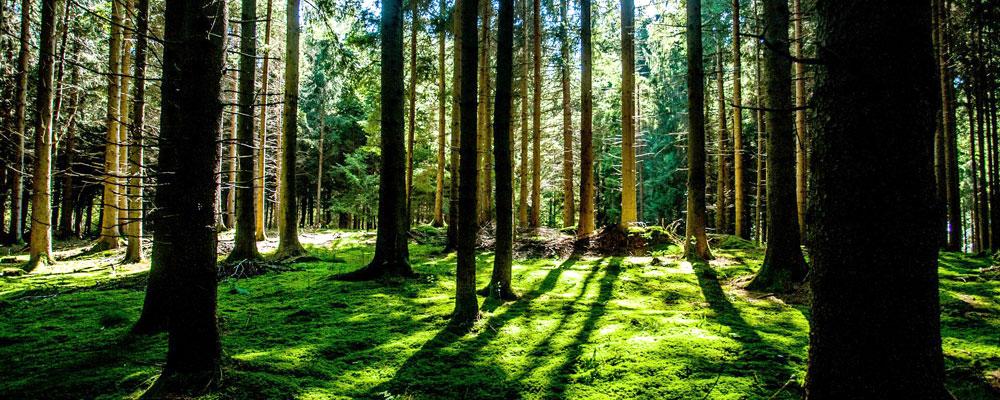 Wanderparadies Schwarzwald